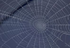 Spider Web by AshenSorrow