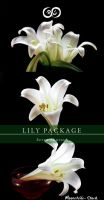 Lily Photo Stock Pack by Moonchilde-Stock