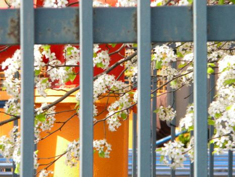 Nature Behind Bars by luina101