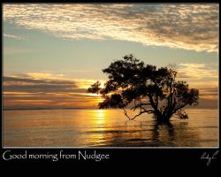 Good morning from Nudgee by 2Stupid2Duck