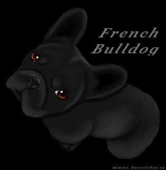 French Bulldog by MOTKK