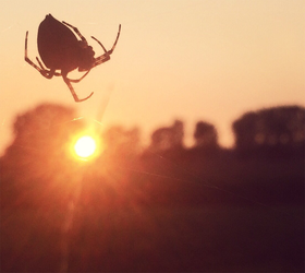 The Spider who caught the Sun by Skia