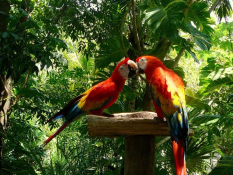 Parrots feeding themselves by CRISTINA78