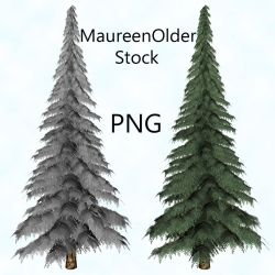 STOCK PNG fir tree by MaureenOlder