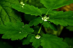 drops by agris58