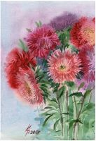 aster pink and red by kosharik69