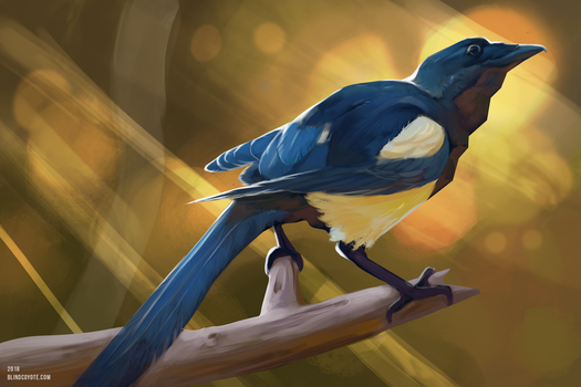 Magpie by BlindCoyote