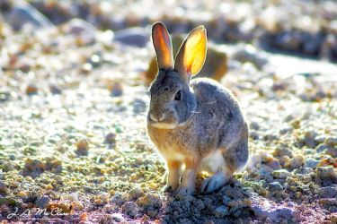 Wascally Wabbit by CanYouSeeTheRealMe