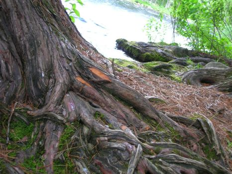 Roots by nikipound