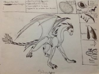 Silverwind's 1st Reference Sheet (Old) by RainbowGuppy1