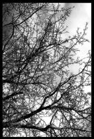 tree. by 129a