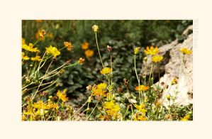Wild Flowers by LessOrdinary