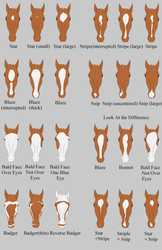 CV Face Marking Guide by TheEndlessHourglass