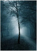 Mysterious tree... by MOSREDNA