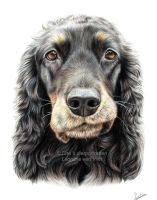 Dana the cocker spaniel, commissioned portrait by LeontinevanVliet
