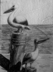 Pelicans by IrinaAsphodel