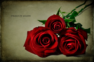 Whispers of Passion by Inadesign