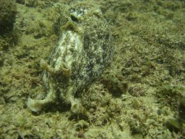 Brown Sea Hare by chrystalization