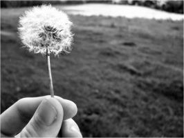 Dandelion in Black and White by Oiseauii