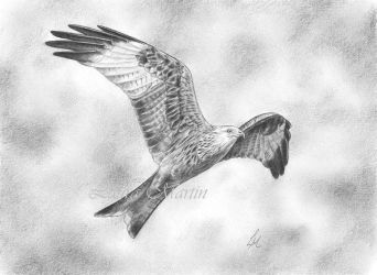Red Kite by Caelitha