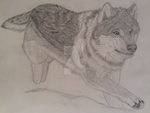 Wolf Running by Wild-As-Wolves