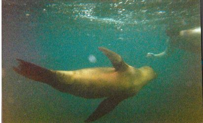 Swimming With Sea Lions - LOMO by elfgurl06