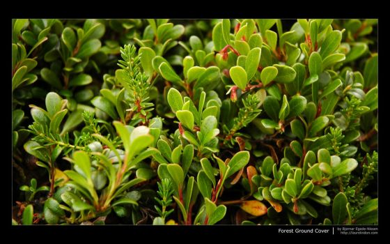 Forest Ground Cover Wallpaper by meikon