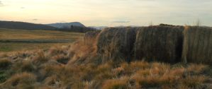 bales of hay by pungen