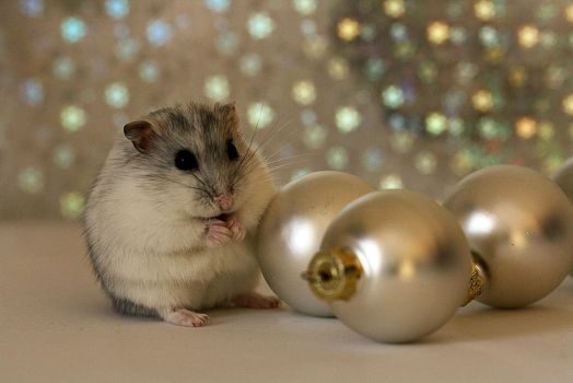 Christmas Hamster by AlleyCat91