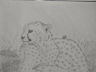 Cheetah practice by kosko99