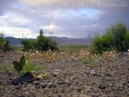 Rainbow's End by jdrainville