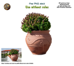 terracotta pot with plant PNG stock by darkmoon1968