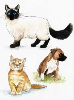 Animal Sketches by Renatex24