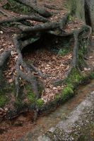 Forest Stock 137 by Malleni-Stock