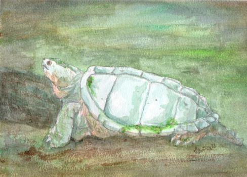 Snapping Turtle by Umberink