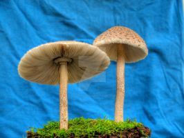 More HDR Mushrooms 3 by Dracoart-Stock