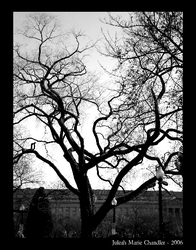 Tangled Web of Branches by tropicallili