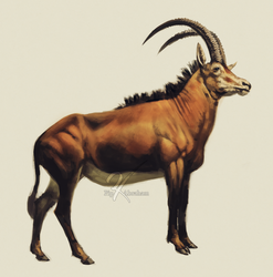 Sable Antelope by oxpecker