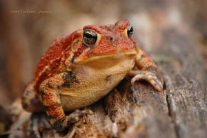 toadily spring by photom17