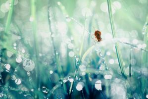 With Morning Bokeh by djusa