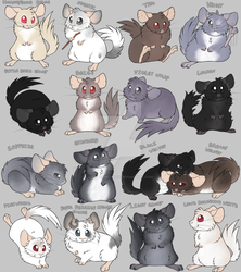 Chinchilla Colors V2 by AwesomeKady