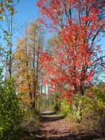 Colored Path by ClairvoyantStudios