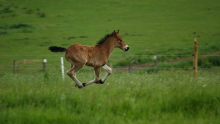 Foal 03 by candigal