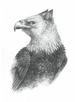 Gryphon by MartyDeath