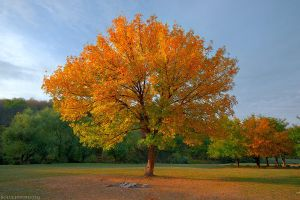 The golden tree by Viand