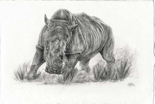 An Awesome Rhino by CatAclysmArt