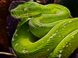 Green Tree Python by justinlavelle
