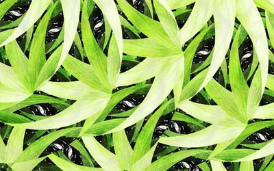 Bamboo Groove . For Leaf-Lover by OutsideFate