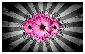 Flowers and colors serie 01 by villanitadesign