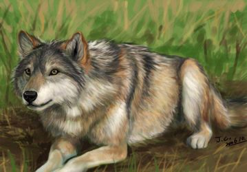 Style practice--realistic wolf by J-C